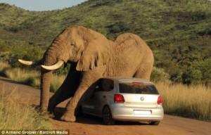 sudafrica-un-elefante-schiaccia-un-auto-577276